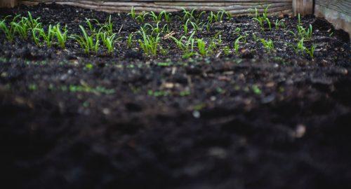 Pinduoduoは肥料業界の巨人と提携し、流行の兆しが見える園芸市場へ乗り出す